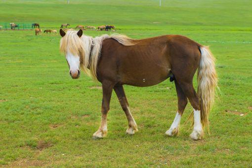 駿馬の読み方と意味、「しゅんめ」と「しゅんば」正しいのは?